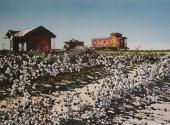 Cooton field Santa Fe statio acquerello 35X50